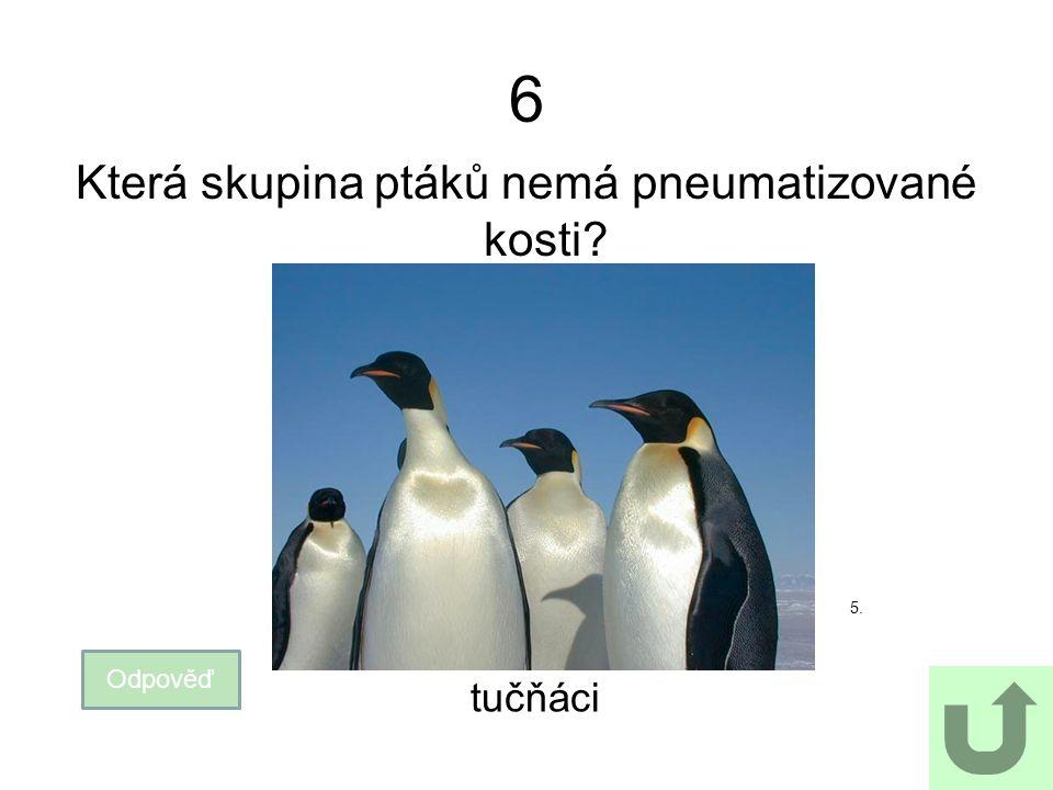 6 Která skupina ptáků nemá pneumatizované kosti? Odpověď tučňáci 5.
