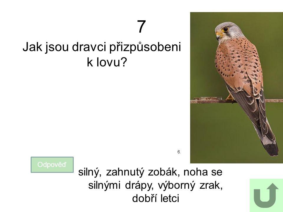 7 Jak jsou dravci přizpůsobeni k lovu? Odpověď silný, zahnutý zobák, noha se silnými drápy, výborný zrak, dobří letci 6.
