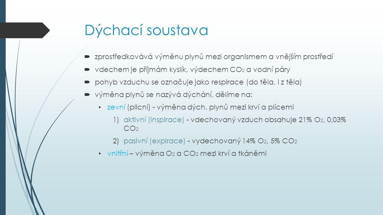 Dýchací soustava  zprostředkovává výměnu plynů mezi organismem a vnějším prostředí  vdechem je příjmám kyslík, výdechem CO 2 a vodní páry  pohyb vz