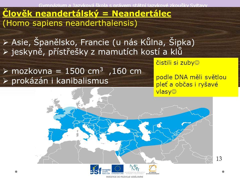 Gymnázium a Jazyková škola s právem státní jazykové zkoušky Svitavy Člověk neandertálský = Neandertálec (Homo sapiens neanderthalensis)  Asie, Španělsko, Francie (u nás Kůlna, Šipka)  jeskyně, přístřešky z mamutích kostí a klů  mozkovna = 1500 cm 3,160 cm  prokázán i kanibalismus 13 čistili si zuby podle DNA měli světlou pleť a občas i ryšavé vlasy