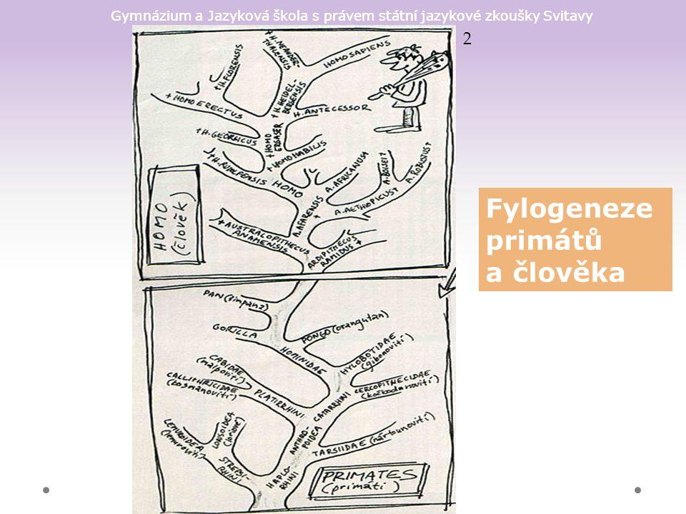 Gymnázium a Jazyková škola s právem státní jazykové zkoušky Svitavy Fylogeneze primátů a člověka 2
