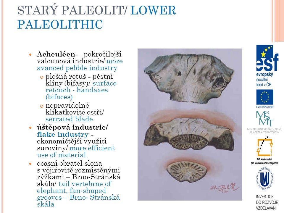STARÝ PALEOLIT/ LOWER PALEOLITHIC Acheuléen – pokročilejší valounová industrie/ more avanced pebble industry plošná retuš - pěstní klíny (bifasy)/ surface retouch - handaxes (bifaces) nepravidelné klikatkovité ostří/ serrated blade úštěpová industrie/ flake industry - ekonomičtější využití suroviny/ more efficient use of material ocasní obratel slona s vějířovitě rozmístěnými rýžkami – Brno-Stránská skála/ tail vertebrae of elephant, fan-shaped grooves – Brno- Stránská skála