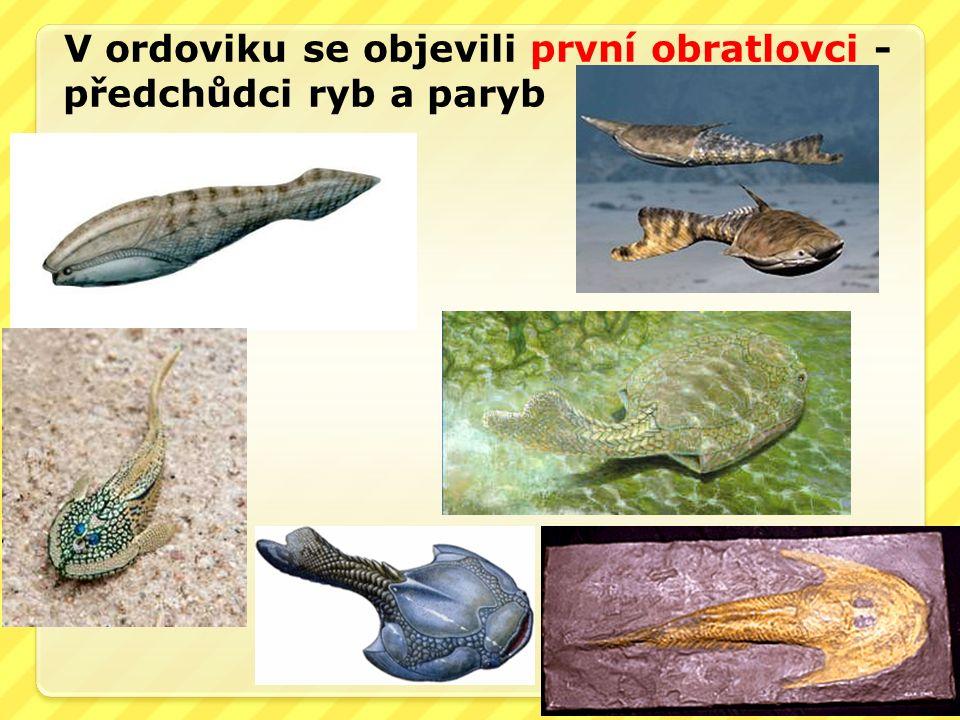 V ordoviku se objevili první obratlovci - předchůdci ryb a paryb