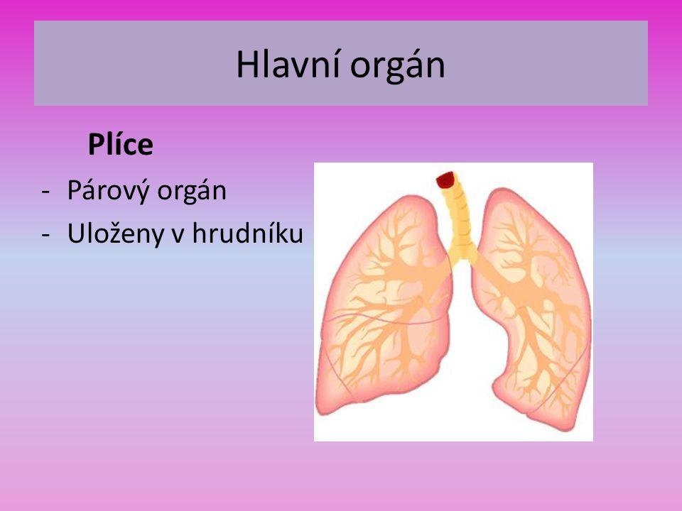 Hlavní orgán Plíce -Párový orgán -Uloženy v hrudníku