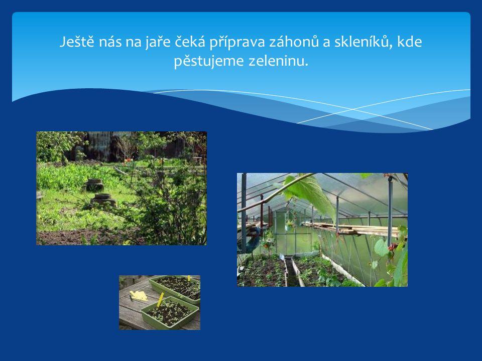 Ještě nás na jaře čeká příprava záhonů a skleníků, kde pěstujeme zeleninu.
