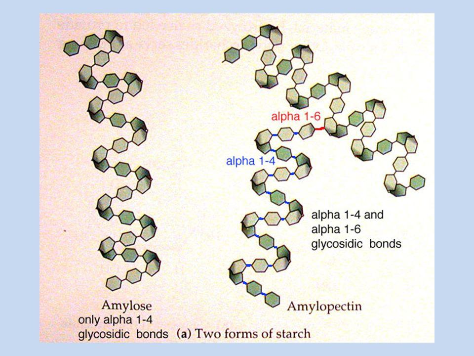 Amylopektin Rozvětvenou strukturu, na 25 spojů α-1,4 je 1 spoj α- 1,6 Má vyšší molekulovou hmotnost než amylóza Ve studené vodě se nerozpouští V horké vodě – škrobový maz