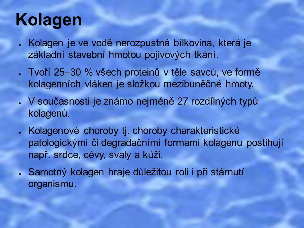 Kolagen ● Kolagen je ve vodě nerozpustná bílkovina, která je základní stavební hmotou pojivových tkání. ● Tvoří 25–30 % všech proteinů v těle savců, v