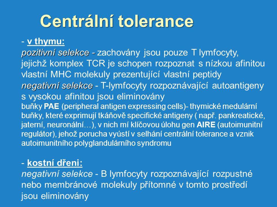 Centrální tolerance - v thymu: pozitivní selekce - pozitivní selekce - zachovány jsou pouze T lymfocyty, jejichž komplex TCR je schopen rozpoznat s nízkou afinitou vlastní MHC molekuly prezentující vlastní peptidy negativní selekce negativní selekce - T-lymfocyty rozpoznávající autoantigeny s vysokou afinitou jsou eliminovány buňky PAE (peripheral antigen expressing cells)- thymické medulární buňky, které exprimují tkáňově specifické antigeny ( např.