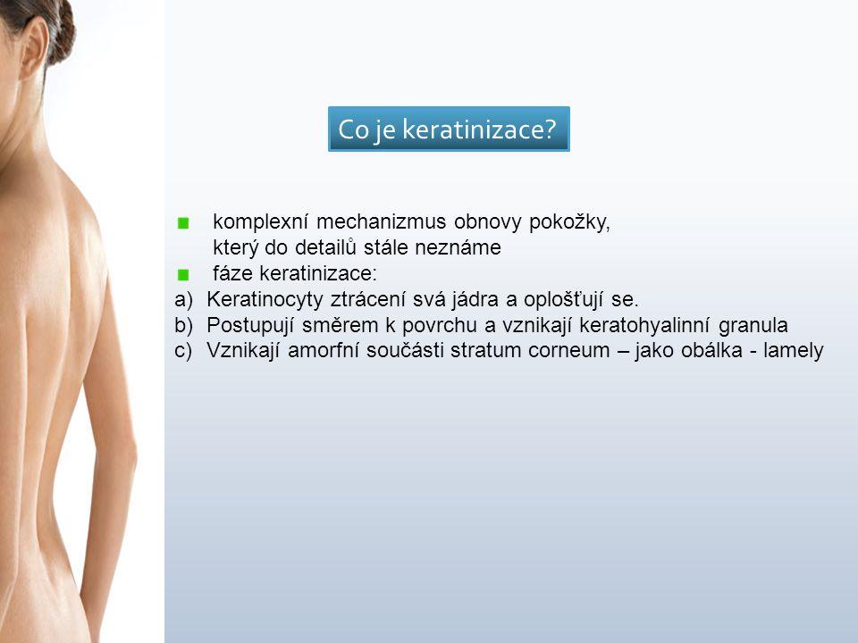 komplexní mechanizmus obnovy pokožky, který do detailů stále neznáme fáze keratinizace: a)Keratinocyty ztrácení svá jádra a oplošťují se.