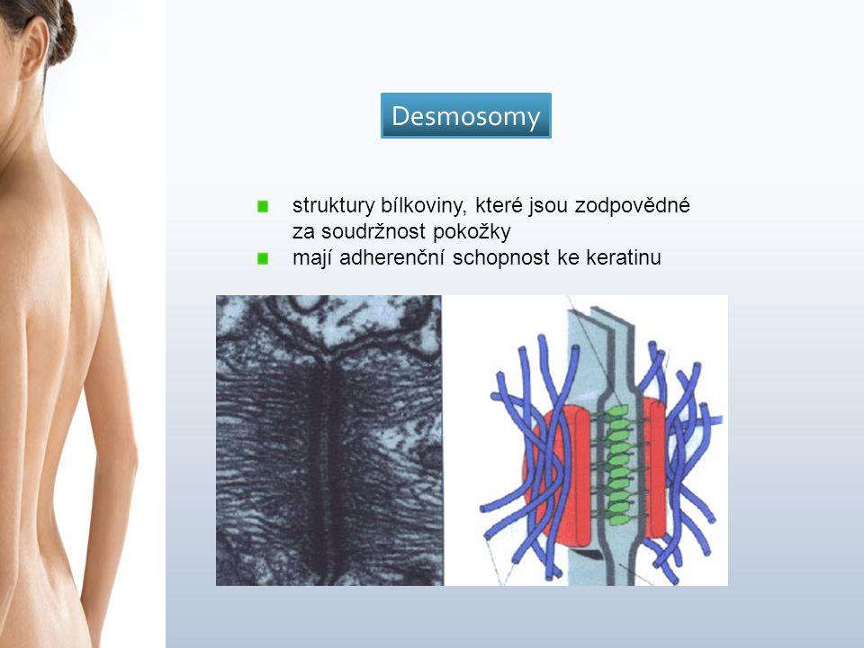 struktury bílkoviny, které jsou zodpovědné za soudržnost pokožky mají adherenční schopnost ke keratinu