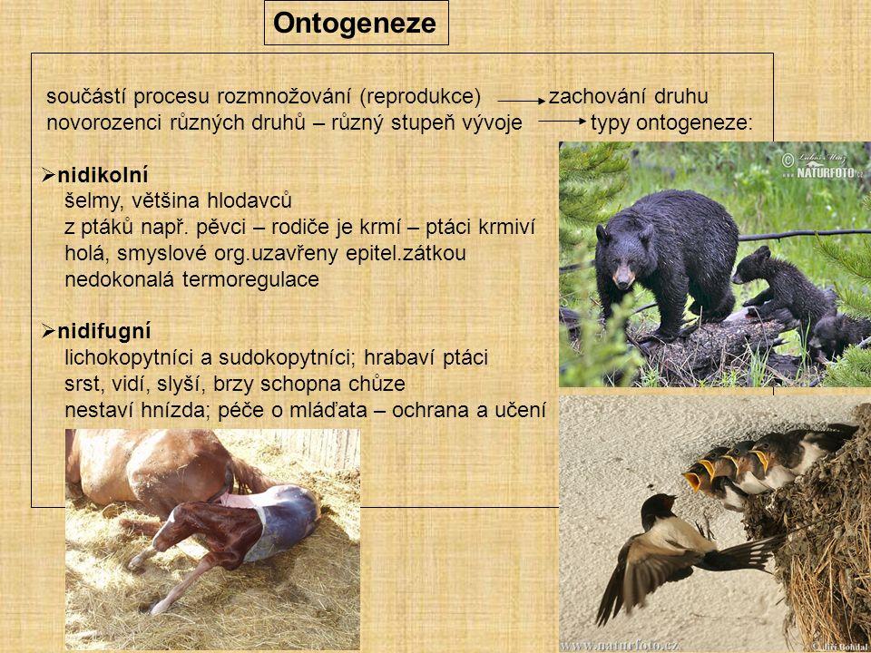 Ontogeneze součástí procesu rozmnožování (reprodukce) zachování druhu novorozenci různých druhů – různý stupeň vývoje typy ontogeneze:  nidikolní šelmy, většina hlodavců z ptáků např.
