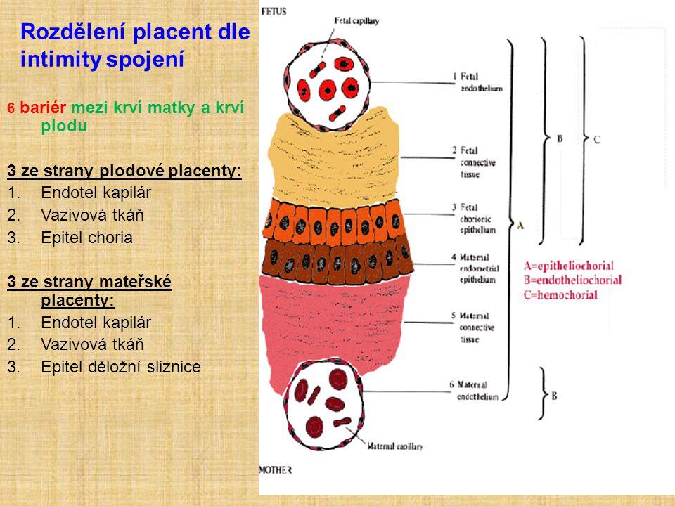 Rozdělení placent dle intimity spojení 6 bariér mezi krví matky a krví plodu 3 ze strany plodové placenty: 1.Endotel kapilár 2.Vazivová tkáň 3.Epitel choria 3 ze strany mateřské placenty: 1.Endotel kapilár 2.Vazivová tkáň 3.Epitel děložní sliznice