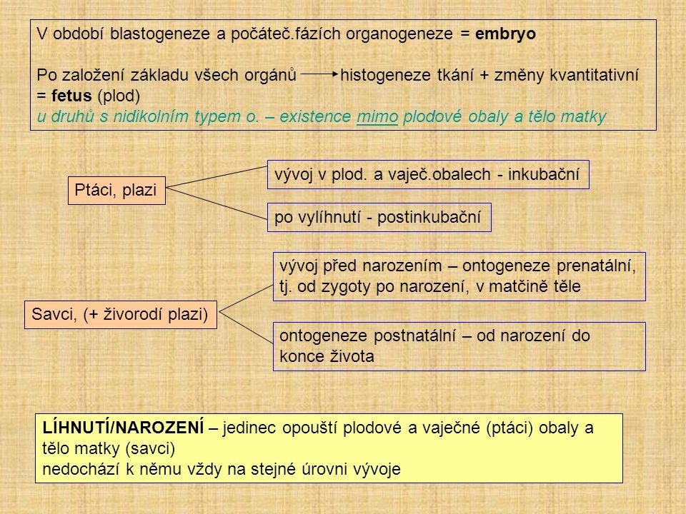 V období blastogeneze a počáteč.fázích organogeneze = embryo Po založení základu všech orgánů histogeneze tkání + změny kvantitativní = fetus (plod) u druhů s nidikolním typem o.