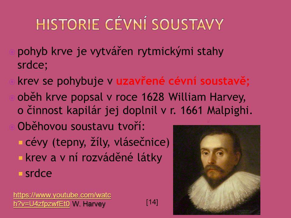  pohyb krve je vytvářen rytmickými stahy srdce;  krev se pohybuje v uzavřené cévní soustavě;  oběh krve popsal v roce 1628 William Harvey, o činnost kapilár jej doplnil v r.