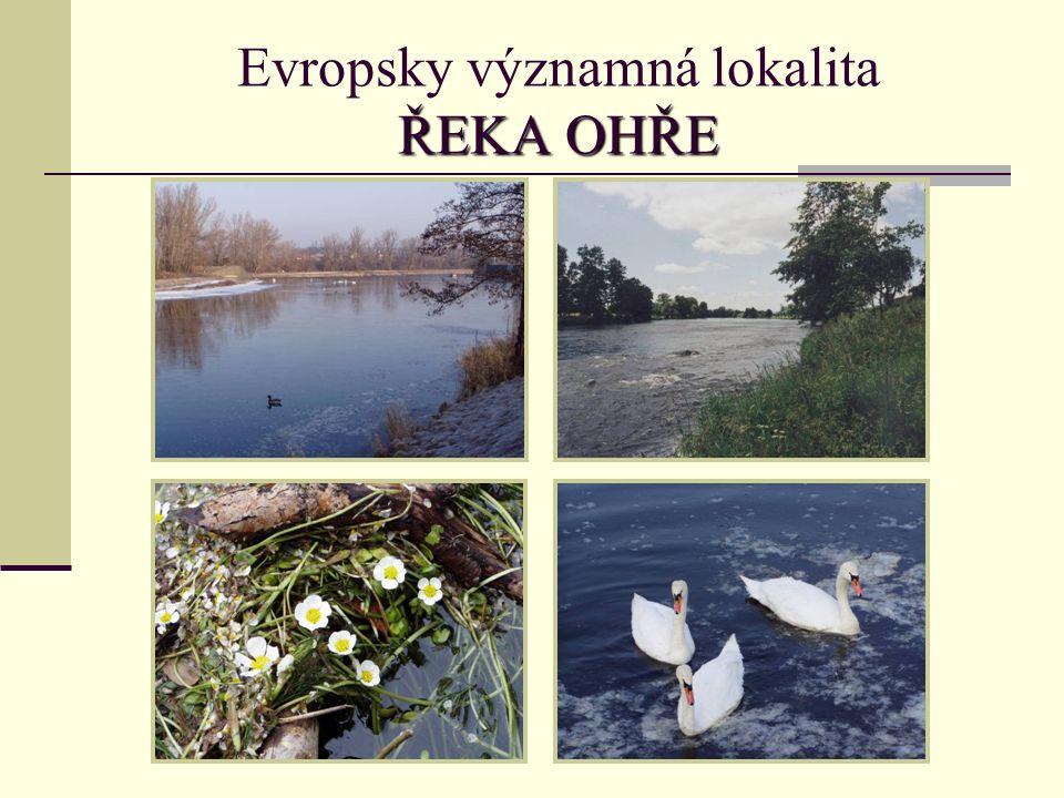 ŘEKA OHŘE Evropsky významná lokalita ŘEKA OHŘE