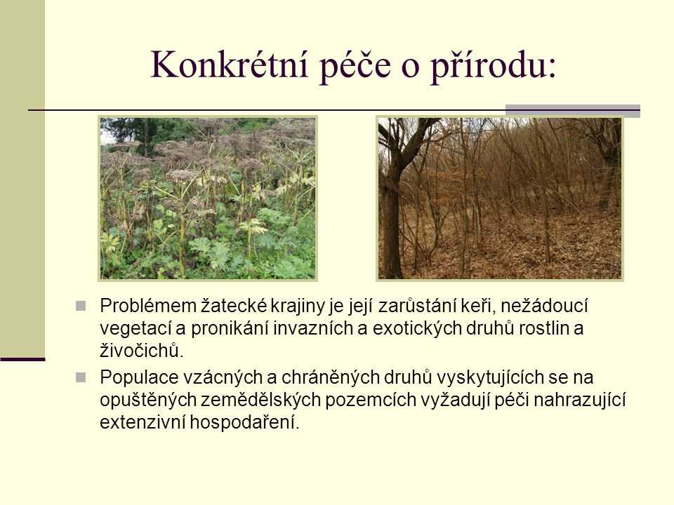 Konkrétní péče o přírodu: Problémem žatecké krajiny je její zarůstání keři, nežádoucí vegetací a pronikání invazních a exotických druhů rostlin a živočichů.