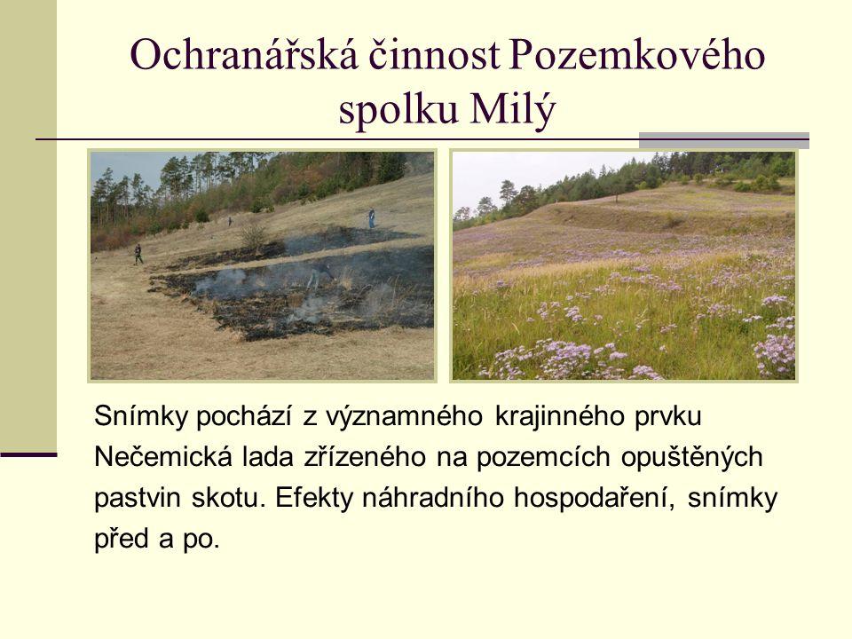 Ochranářská činnost Pozemkového spolku Milý Snímky pochází z významného krajinného prvku Nečemická lada zřízeného na pozemcích opuštěných pastvin skotu.
