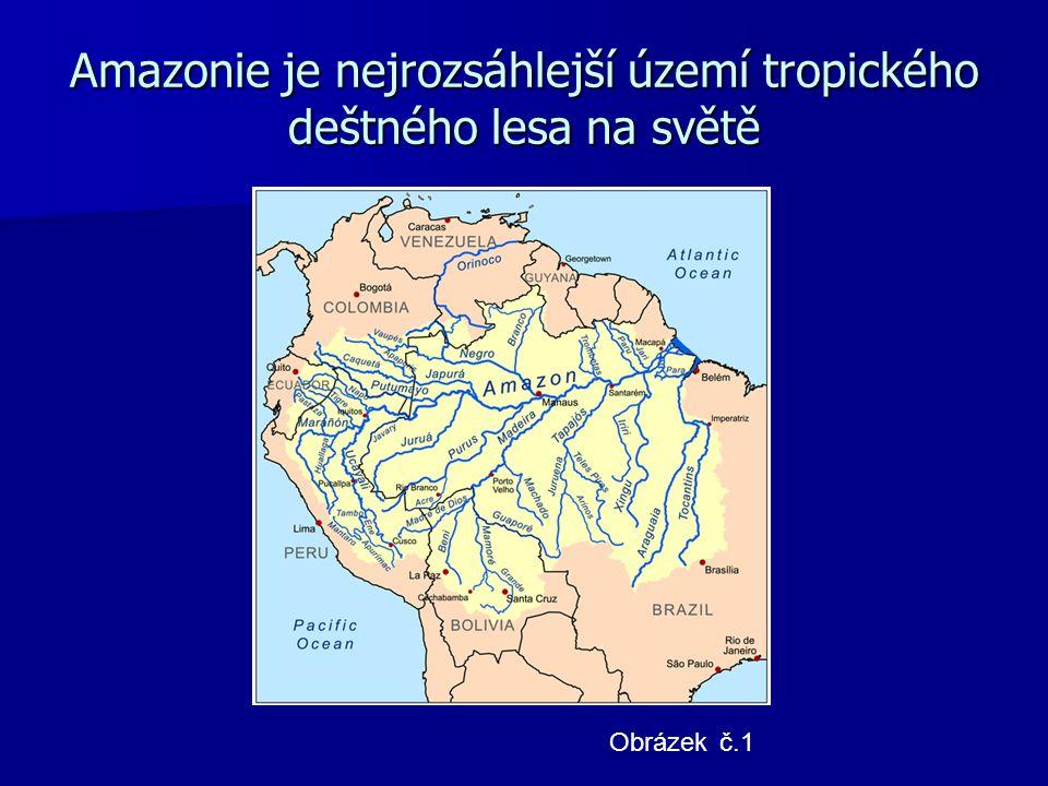 Amazonie je nejrozsáhlejší území tropického deštného lesa na světě Obrázek č.1