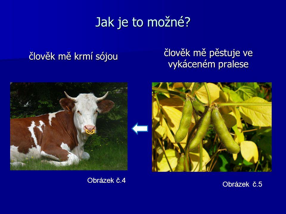 Geneticky modifikovaná sója (roundup ready) pěstovaná monokulturně na vykácených plochách pěstovaná monokulturně na vykácených plochách hlavní součást krmiva ve velkochovech dobytka hlavní součást krmiva ve velkochovech dobytka odolává totálnímu herbicidu (roundupu) odolává totálnímu herbicidu (roundupu) obtížně zničitelná v případě obměny plodin obtížně zničitelná v případě obměny plodin vývoz do Evropy, Asie a Severní Ameriky – 65% spotřeby vývoz do Evropy, Asie a Severní Ameriky – 65% spotřeby Obrázek č.6