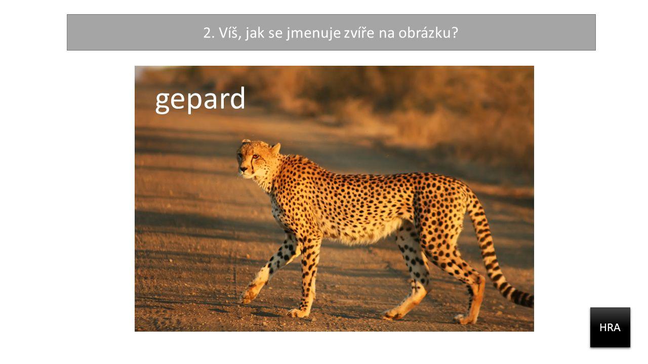 2. Víš, jak se jmenuje zvíře na obrázku? HRA gepard
