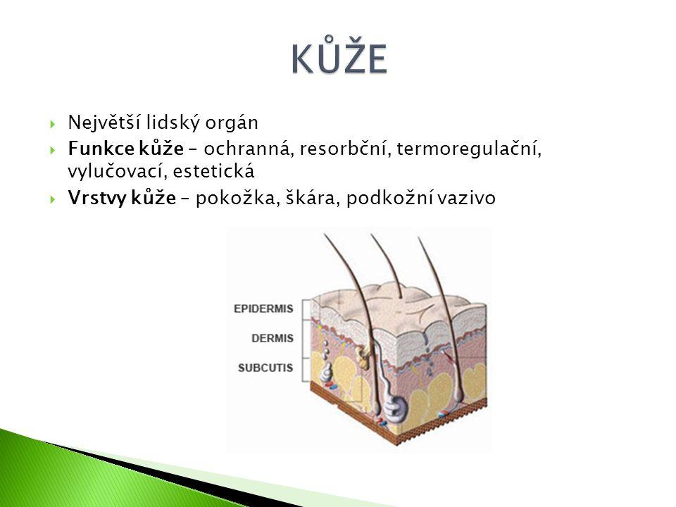  Největší lidský orgán  Funkce kůže – ochranná, resorbční, termoregulační, vylučovací, estetická  Vrstvy kůže – pokožka, škára, podkožní vazivo