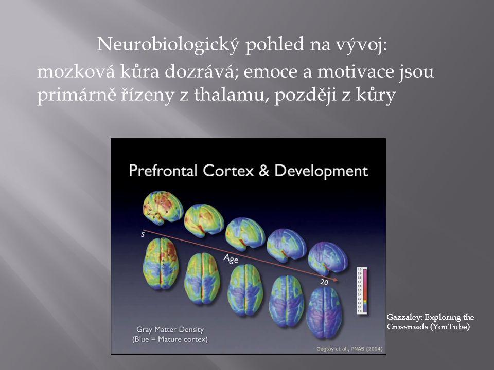 Neurobiologický pohled na vývoj: mozková kůra dozrává; emoce a motivace jsou primárně řízeny z thalamu, později z kůry Gazzaley: Exploring the Crossroads (YouTube)