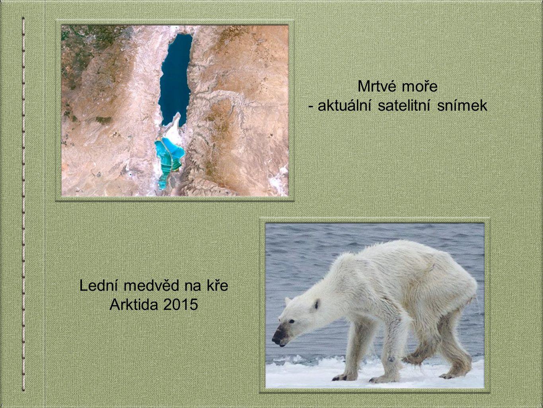 Mrtvé moře - aktuální satelitní snímek Lední medvěd na kře Arktida 2015