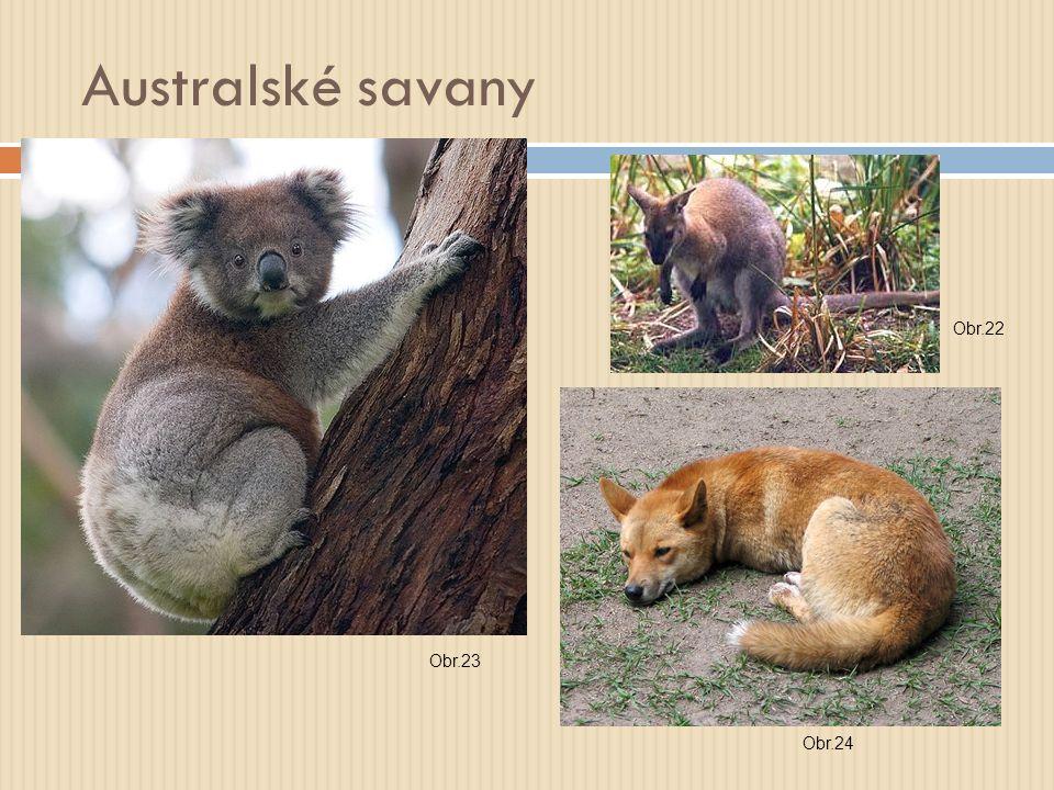Australské savany Obr.22 Obr.23 Obr.24