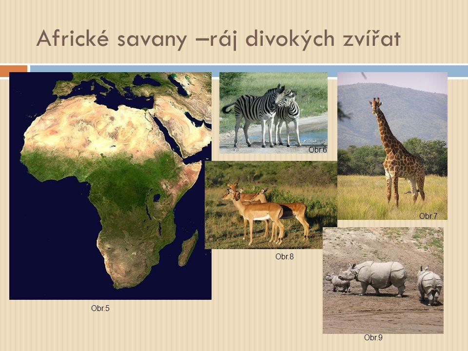 Africké savany –ráj divokých zvířat Obr.5 Obr.6 Obr.7 Obr.8 Obr.9