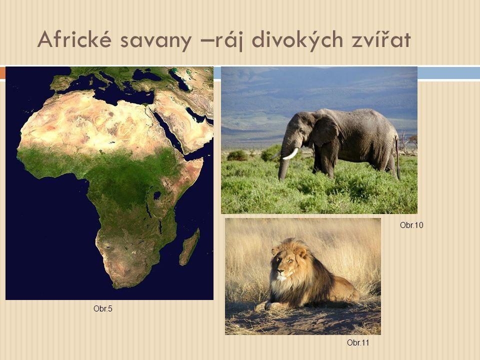 Africké savany –ráj divokých zvířat Obr.5 Obr.10 Obr.11