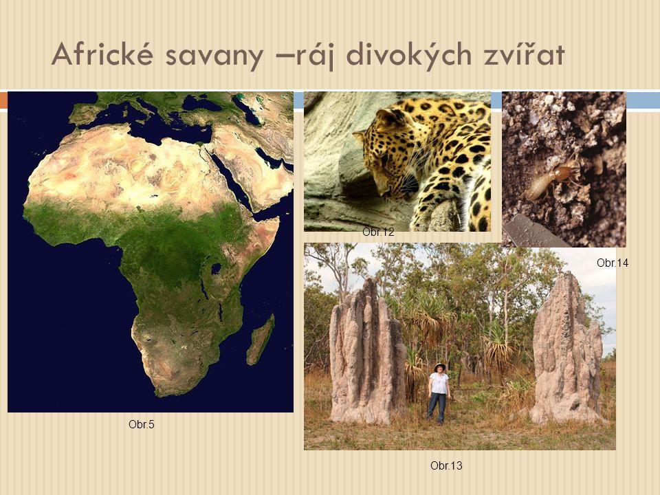 Africké savany –ráj divokých zvířat Obr.5 Obr.12 Obr.13 Obr.14