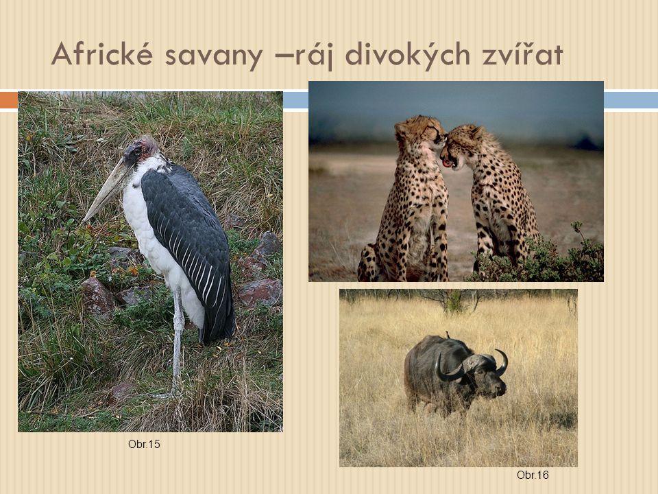 Africké savany –ráj divokých zvířat Obr.15 Obr.16