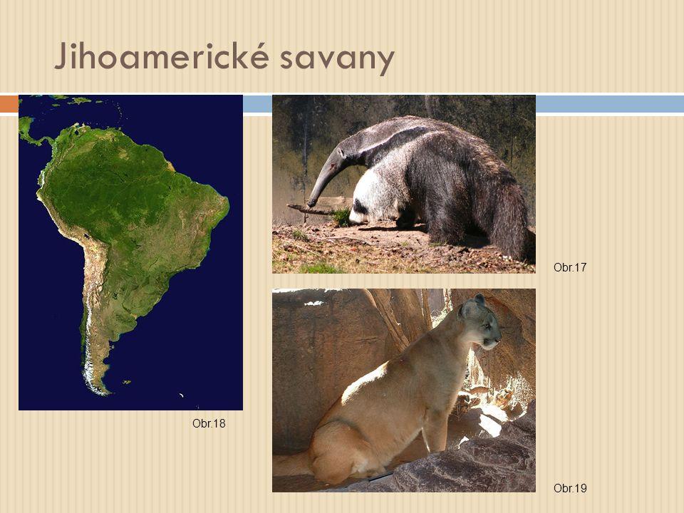 Jihoamerické savany Obr.17 Obr.18 Obr.19