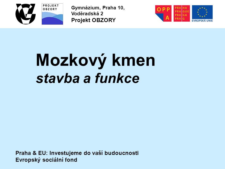 Praha & EU: Investujeme do vaší budoucnosti Evropský sociální fond Gymnázium, Praha 10, Voděradská 2 Projekt OBZORY Mozkový kmen stavba a funkce