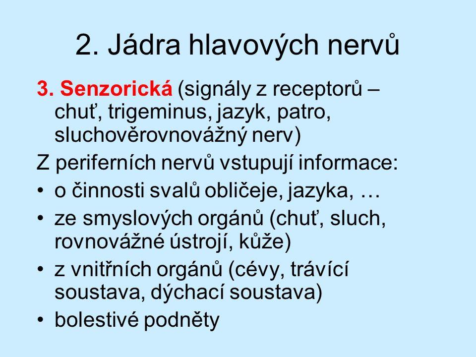 2. Jádra hlavových nervů 3. Senzorická (signály z receptorů – chuť, trigeminus, jazyk, patro, sluchověrovnovážný nerv) Z periferních nervů vstupují in