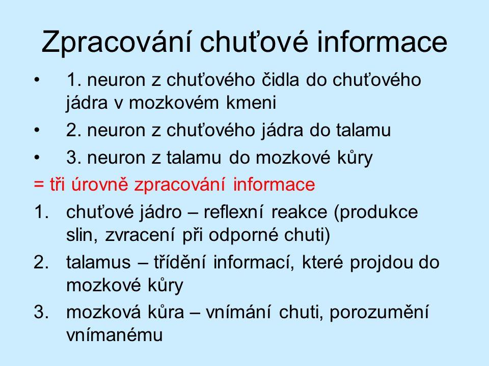 Zpracování chuťové informace 1. neuron z chuťového čidla do chuťového jádra v mozkovém kmeni 2. neuron z chuťového jádra do talamu 3. neuron z talamu