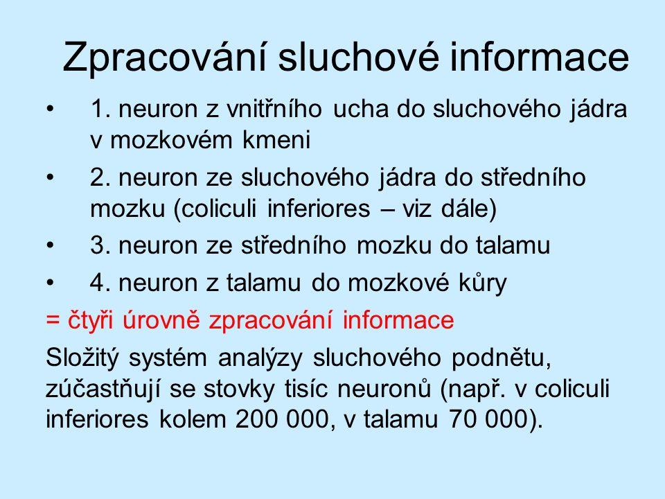 Zpracování sluchové informace 1. neuron z vnitřního ucha do sluchového jádra v mozkovém kmeni 2. neuron ze sluchového jádra do středního mozku (colicu