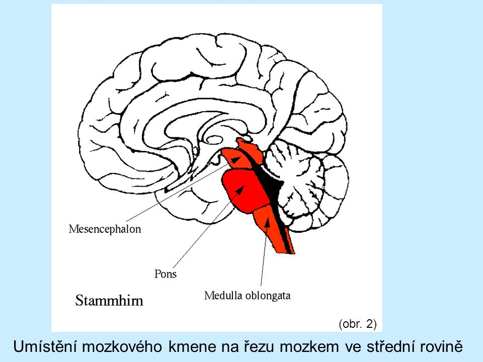 (obr. 2) Umístění mozkového kmene na řezu mozkem ve střední rovině