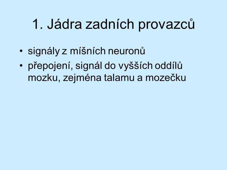 Použité zdroje a literatura ČIHÁK, Radomír: Anatomie III.