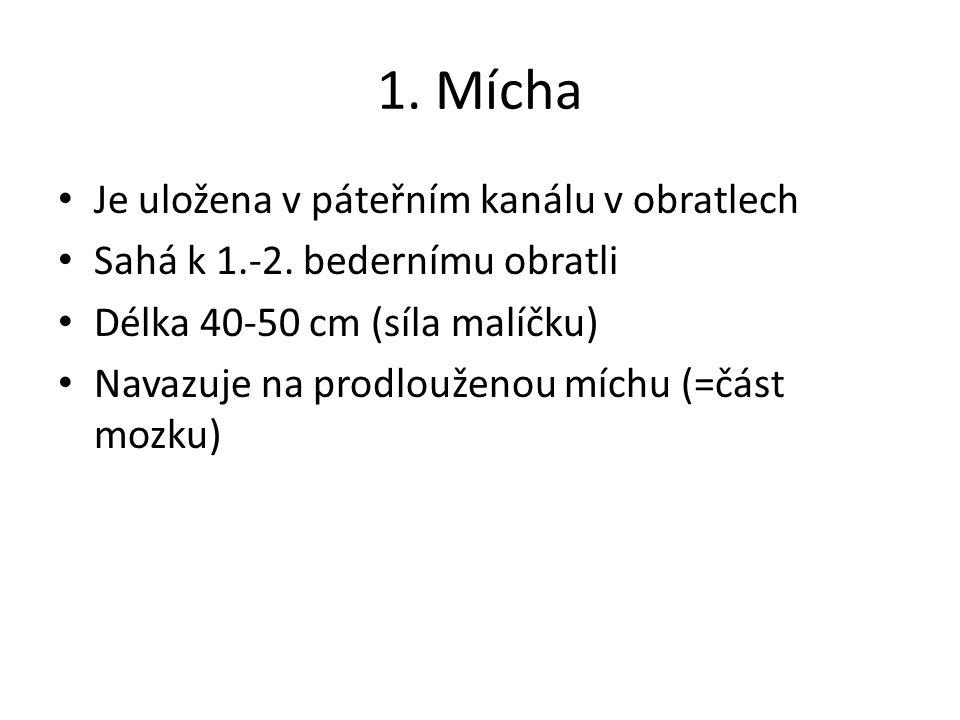 1. Mícha Je uložena v páteřním kanálu v obratlech Sahá k 1.-2.