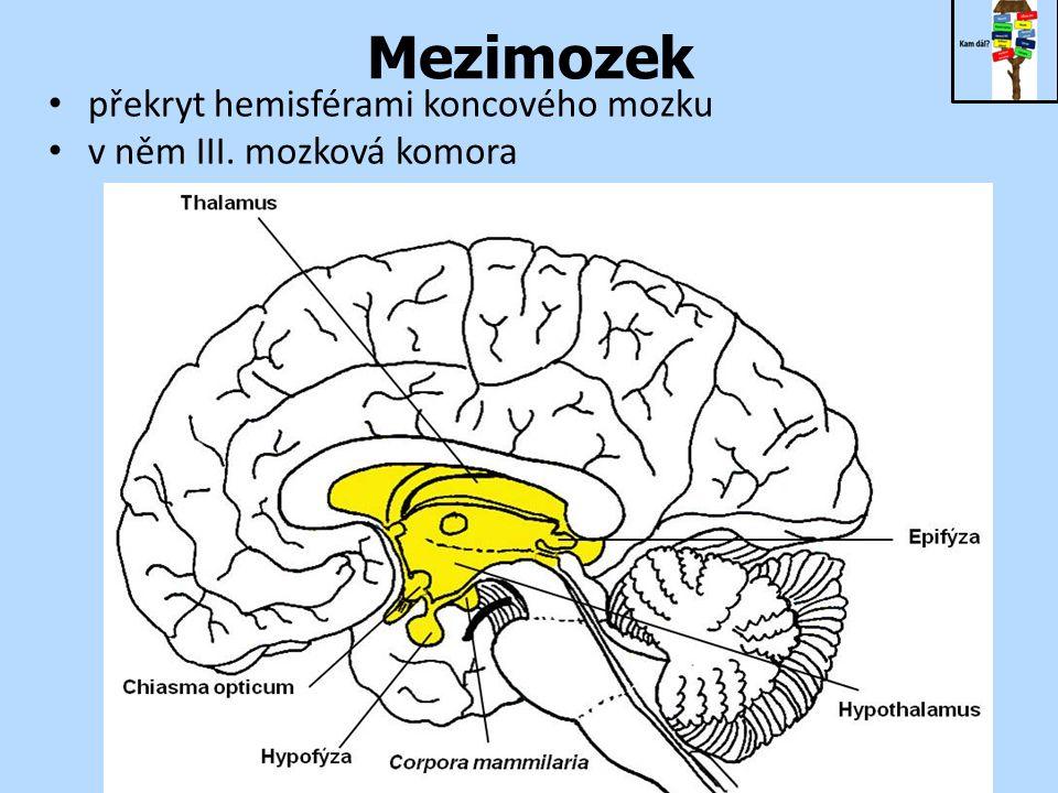 Mezimozek překryt hemisférami koncového mozku v něm III. mozková komora
