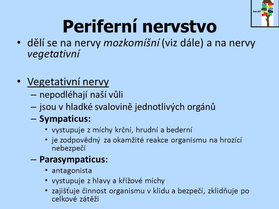 Periferní nervstvo dělí se na nervy mozkomíšní (viz dále) a na nervy vegetativní Vegetativní nervy – nepodléhají naší vůli – jsou v hladké svalovině jednotlivých orgánů – Sympaticus: vystupuje z míchy krční, hrudní a bederní je zodpovědný za okamžité reakce organismu na hrozící nebezpečí – Parasympaticus: antagonista vystupuje z hlavy a křížové míchy zajišťuje činnost organismu v klidu a bezpečí, zklidňuje po celkové zátěži