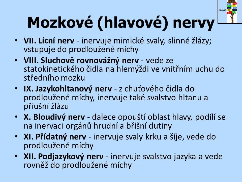 Mozkové (hlavové) nervy VII.