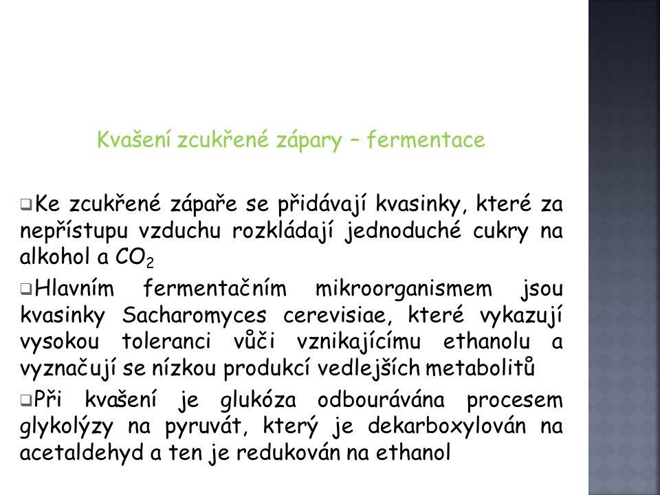 Kvašení zcukřené zápary – fermentace  Ke zcukřené zápaře se přidávají kvasinky, které za nepřístupu vzduchu rozkládají jednoduché cukry na alkohol a CO 2  Hlavním fermentačním mikroorganismem jsou kvasinky Sacharomyces cerevisiae, které vykazují vysokou toleranci vůči vznikajícímu ethanolu a vyznačují se nízkou produkcí vedlejších metabolitů  Při kvašení je glukóza odbourávána procesem glykolýzy na pyruvát, který je dekarboxylován na acetaldehyd a ten je redukován na ethanol