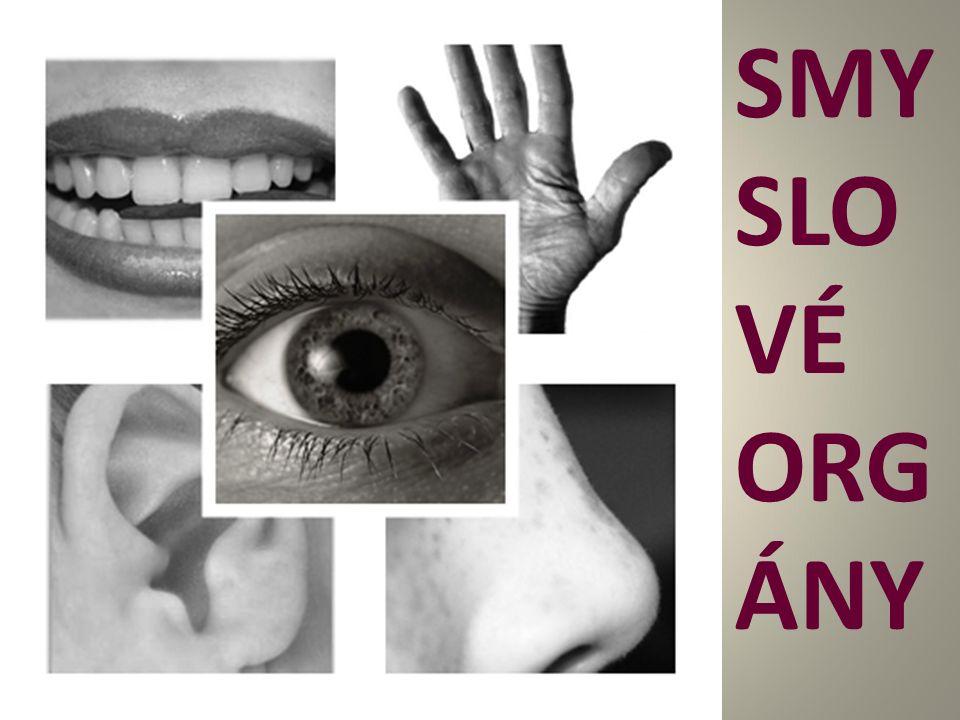 SMYSLOVÉ ORGÁNY (čidla) Umožňují vnímat podněty z okolního prostředí Obsahují buňky (receptory)- reagují na podráždění Podněty vedou dostředivé nervy do CNS 5 SMYSLŮ: zrak, sluch, čich, hmat a chuť Smyslové orgány2