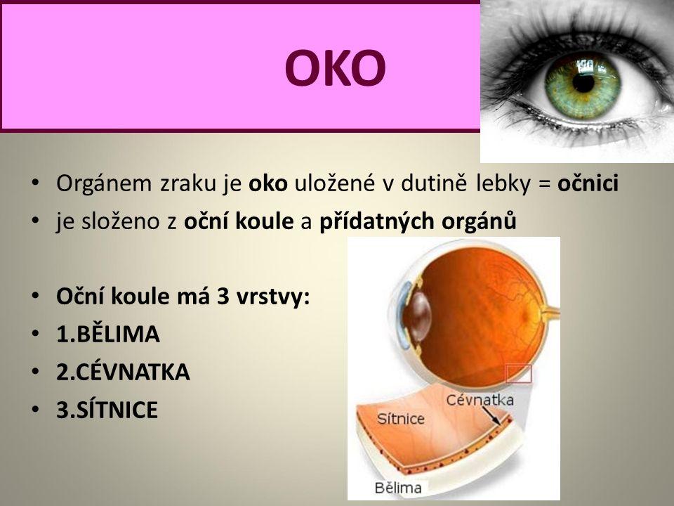 Orgánem zraku je oko uložené v dutině lebky = očnici je složeno z oční koule a přídatných orgánů Oční koule má 3 vrstvy: 1.BĚLIMA 2.CÉVNATKA 3.SÍTNICE OKO