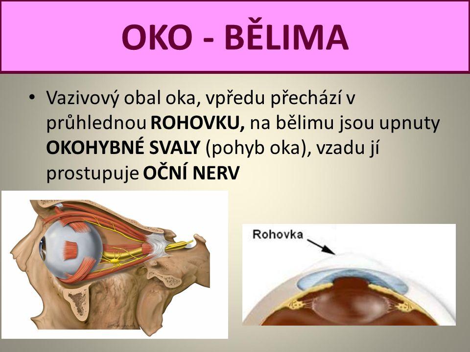 Vazivový obal oka, vpředu přechází v průhlednou ROHOVKU, na bělimu jsou upnuty OKOHYBNÉ SVALY (pohyb oka), vzadu jí prostupuje OČNÍ NERV OKO - BĚLIMA