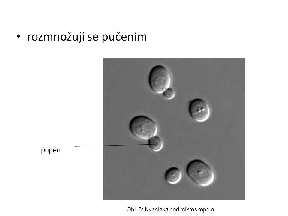 heterotrofní organismy – všechny potraviny získávají ze svého okolí schopnost kvašení – rozkladný proces, kvasinky jsou rozkladači (reducenti) vyvolávají alkoholové kvašení cukerných roztoků – vzniká oxid uhličitý a alkohol Obr.