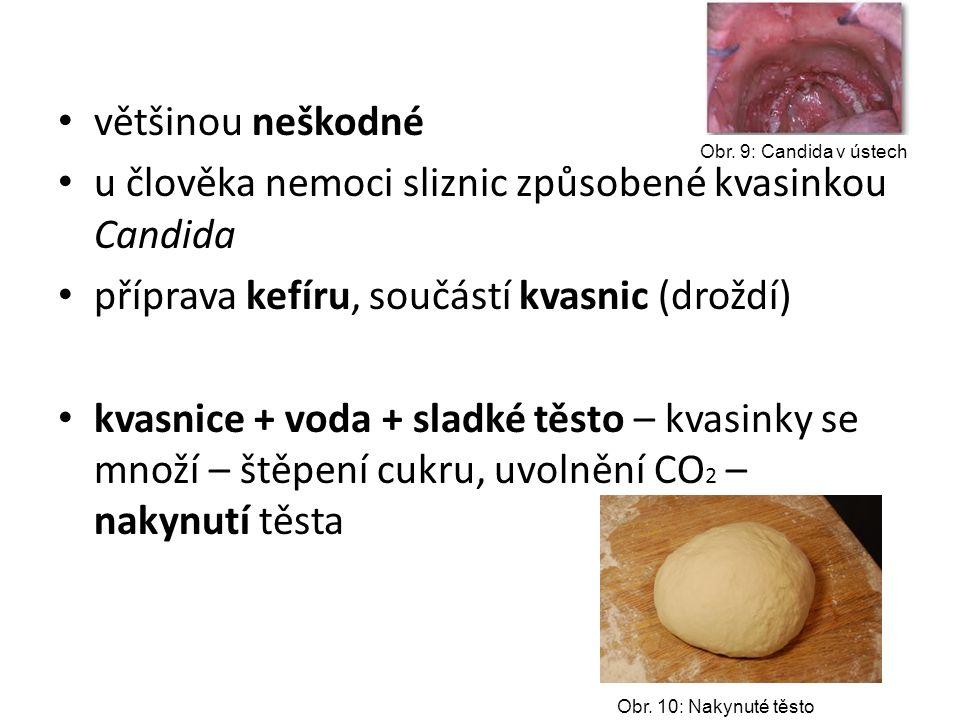 většinou neškodné u člověka nemoci sliznic způsobené kvasinkou Candida příprava kefíru, součástí kvasnic (droždí) kvasnice + voda + sladké těsto – kva