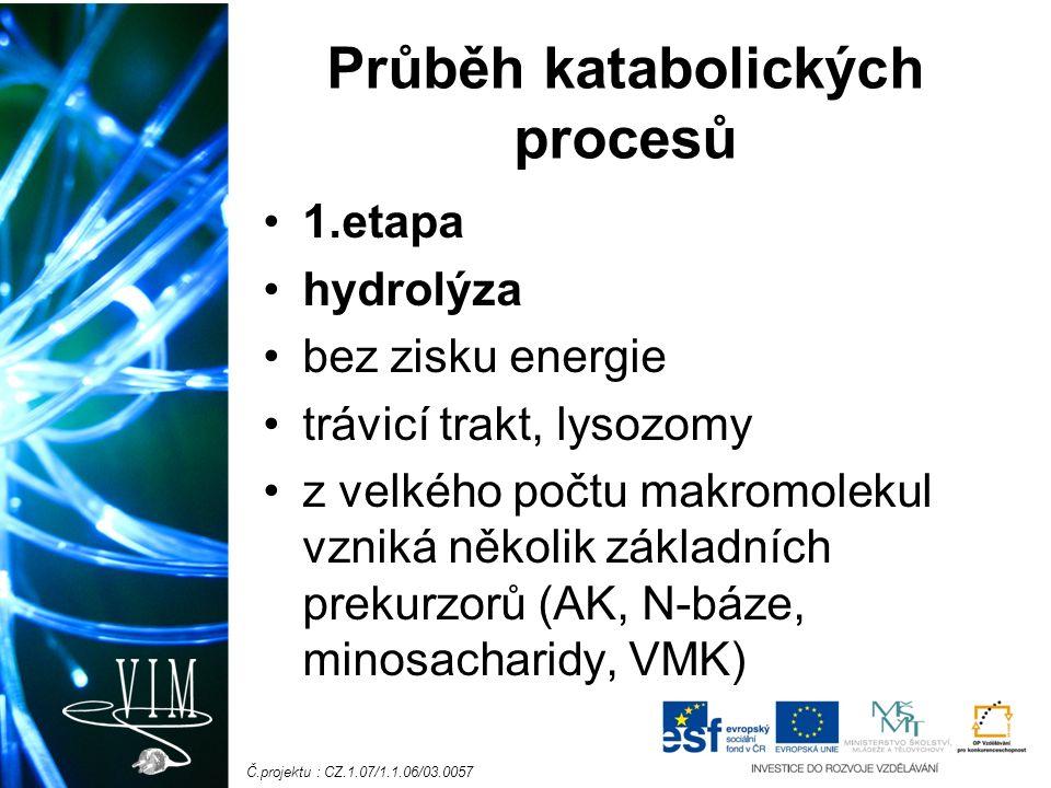 Č.projektu : CZ.1.07/1.1.06/03.0057 Průběh katabolických procesů 1.etapa hydrolýza bez zisku energie trávicí trakt, lysozomy z velkého počtu makromolekul vzniká několik základních prekurzorů (AK, N-báze, minosacharidy, VMK)